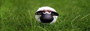 Elever des moutons