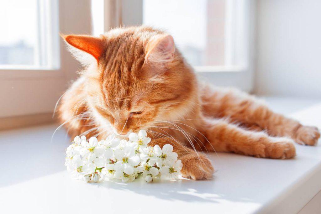 santé et bien-être adaptés aux chats